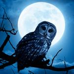 CKUA Radio Night Owls